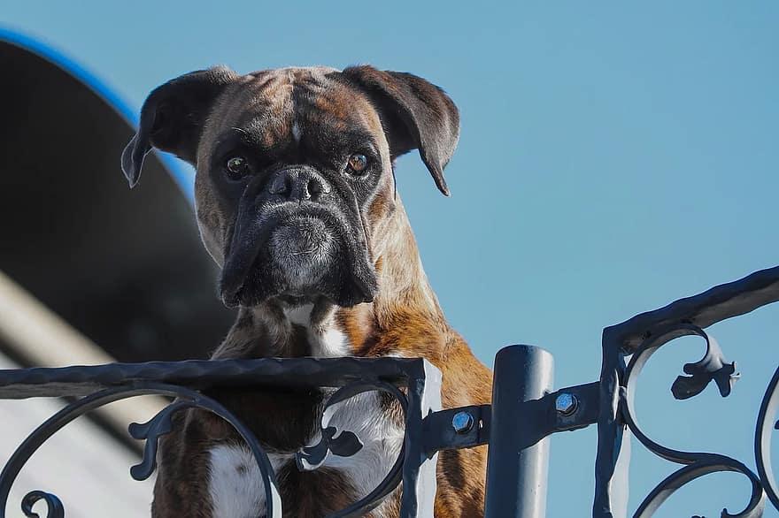 Honden zijn echte wakers. Ze kunnen je dan ook een veilig gevoel geven.
